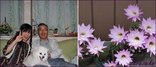 サボテンの花,敬老の日画像