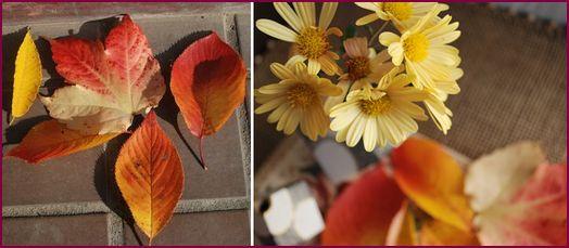 落ち葉と菊の花