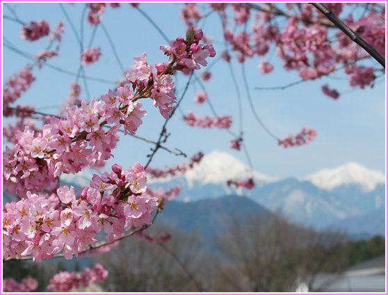 安曇野の桜2010